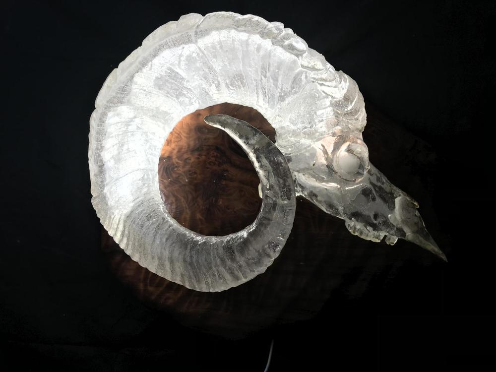 Half full skull Dall Sheep Sconce cast in clear resin and illuminated with leds right side - The Antler Shack Bighorn Sheep Lamps Wild Sheep reproductions