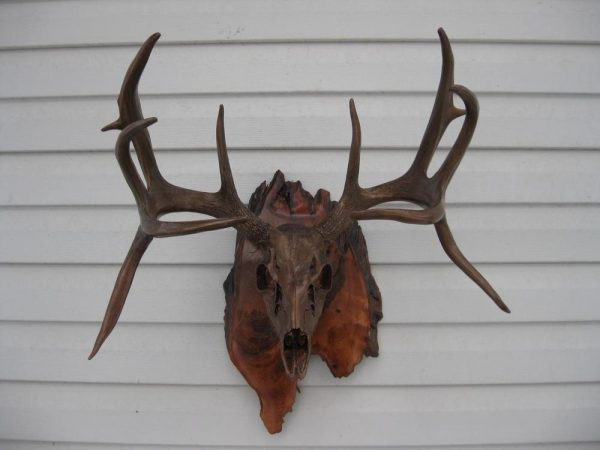 Below See Level - The Antler Shack copper,bronze, brass, and silver metalized creations limited addition bronze