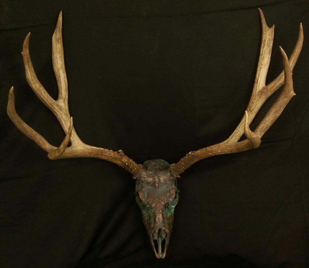 Mule Deer AntlersWyoming Deer and Elk Antlers - Wyoming - Wyoming Deer and Elk Antlers -
