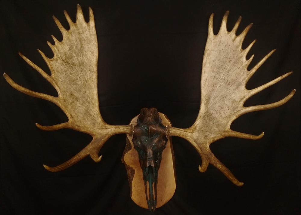 Bronze/Green Moose With Grizzly Tracks - The Antler Shack copper,bronze, brass, and silver metalized creations limited addition bronze