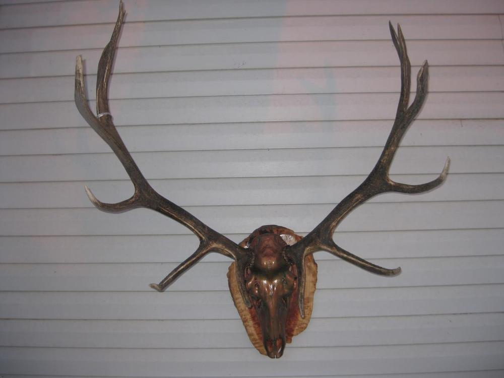 Copper Elk - The Antler Shack copper,bronze, brass, and silver metalized creations limited addition bronze