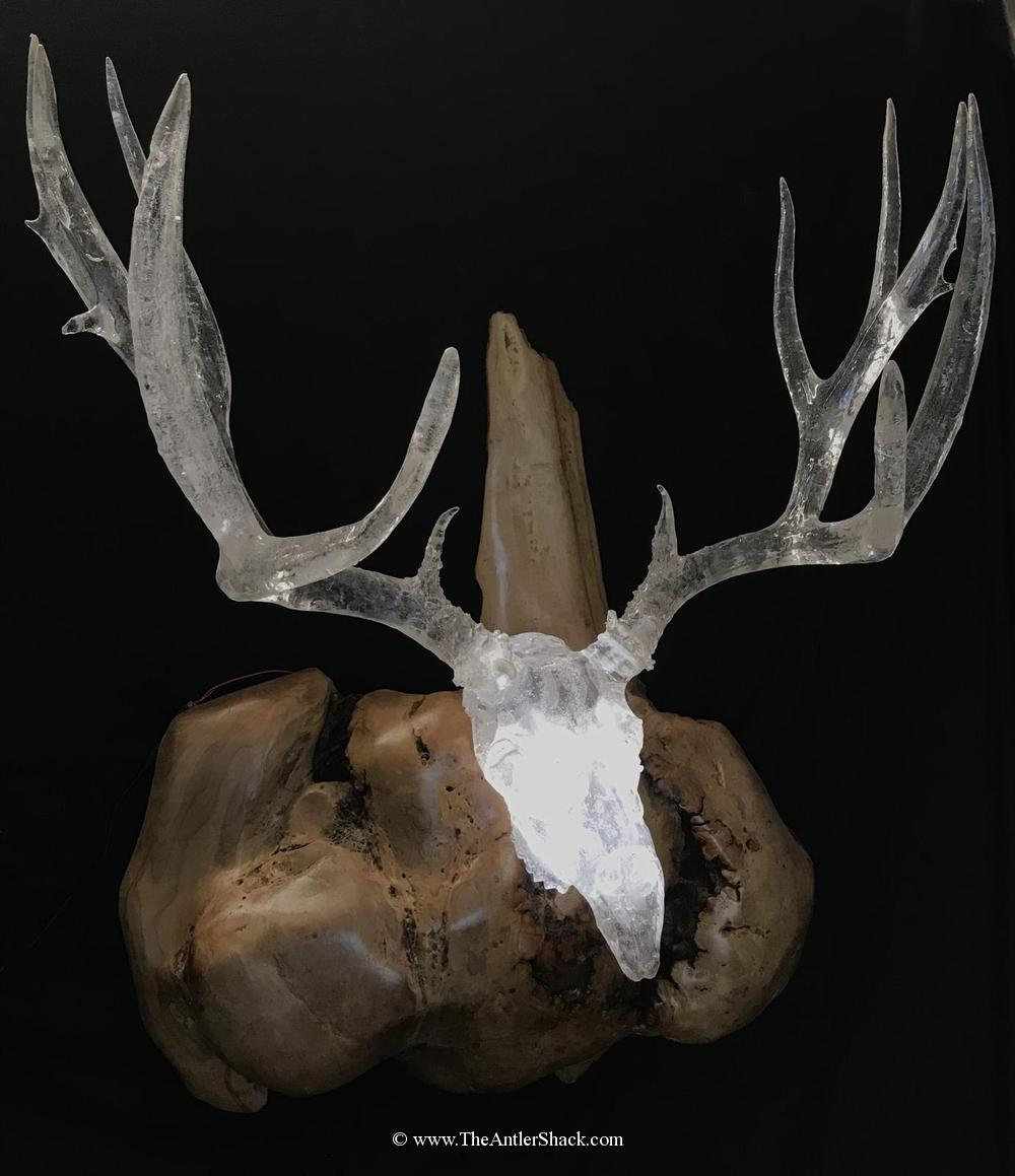 Giant Mule Deer - Clear CastingIlluminated with led lights and accent with a beautiful male burl base - The Antler Shack Antler Lamp Clear Castings